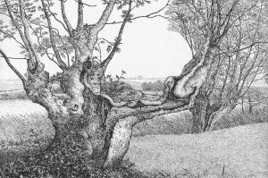 Reinder Homan - Oude Es