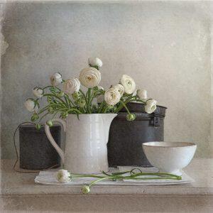 Tineke Stoffels - Ranunculus