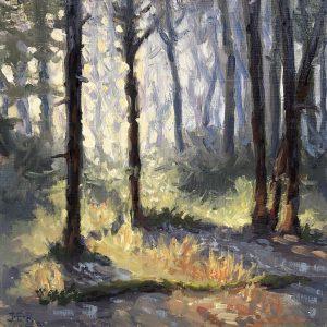 Janey Robertson - Forest Shadow II
